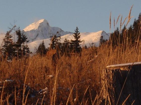 Chaty Tatra