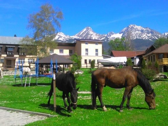 Monty Ranch Stola